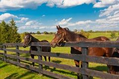 Hästar på hästlantgården royaltyfria bilder