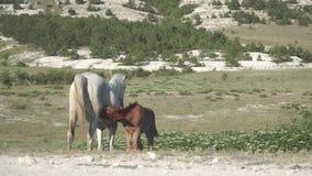 Hästar på i bergen lager videofilmer