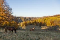 Hästar på kullen Royaltyfria Bilder
