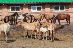 Hästar på lantgården Royaltyfri Bild
