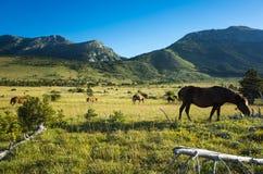 Hästar på Paklenica Velebit Kroatien Europa royaltyfria foton