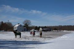 Hästar på snön Royaltyfri Fotografi