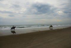 Hästar på stranden Arkivbild