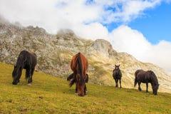Hästar Rutt till och med de underbara ställena av Picosen de Europa royaltyfria bilder