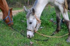 Hästar som äter grönt gräs nära en grusväg royaltyfri fotografi