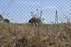 Hästar som betar i fäktat fält royaltyfria foton