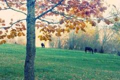 Hästar som betar i gläntahöstskogen Fotografering för Bildbyråer