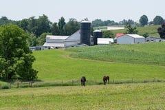 Hästar som betar med lantgården i bakgrund Royaltyfria Foton