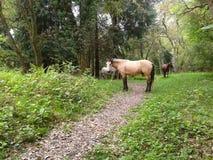 Hästar som betar på en grön äng i träna Royaltyfri Bild