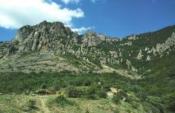 Hästar som betar på foten av berget royaltyfri fotografi