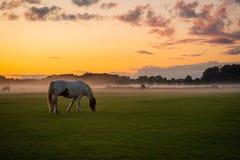 Hästar som betar på solnedgången royaltyfri fotografi