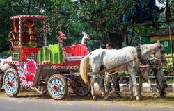 Hästar som exploateras till vagnen i Kolkata Royaltyfri Bild