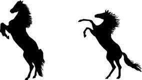 hästar som fostrar silhouetten Royaltyfri Fotografi