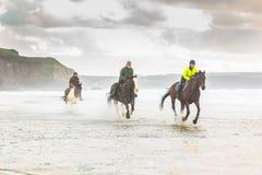 Hästar som galopperar på stranden royaltyfri foto