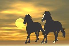 hästar som kör soluppgång Fotografering för Bildbyråer