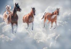 Hästar som kör till och med stormoklarheter Arkivfoto