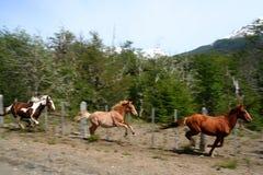 hästar som kör tre Royaltyfri Bild