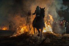 Hästar som korsar branden med deras ryttare arkivfoto