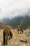 Hästar som matar i molniga berg Fotografering för Bildbyråer