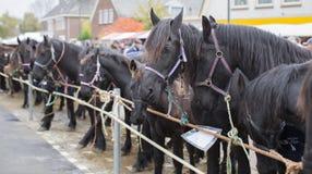 Hästar som ska säljs på en holländsk marknad Royaltyfria Bilder