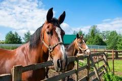 Hästar som står längs ett staket arkivfoto