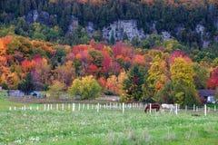 Hästar som stirrar i fallfärger av den Niagara escarpmenten royaltyfria bilder