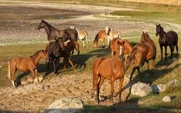 hästar sweden royaltyfria foton