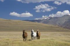 hästar tre arkivfoto