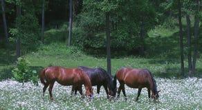 hästar tre royaltyfria bilder