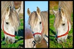 hästar tre Royaltyfri Foto