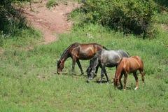 hästar tre Royaltyfri Bild