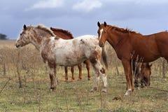 hästar tre Fotografering för Bildbyråer