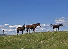 hästar tre royaltyfria foton