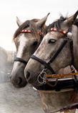 hästar två Arkivfoto