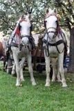 hästar två Royaltyfri Bild