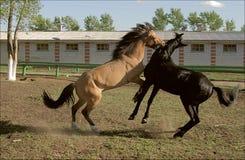 hästar två barn Royaltyfri Foto