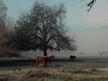 Hästar vid eken stock video