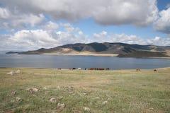 Hästar vid sjön Royaltyfria Bilder