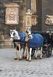 hästar vienna Royaltyfria Bilder