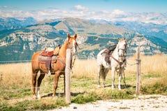Hästar vilar bundet under en bergvandring fotografering för bildbyråer
