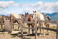 Hästar vilar bundet under en bergvandring royaltyfri fotografi