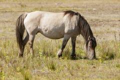 Hästar wildhorses Arkivbild