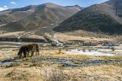 Hästarna Arkivfoto