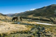 Hästarna Fotografering för Bildbyråer