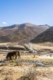 Hästarna Royaltyfri Fotografi