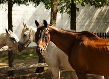 Hästarna i gården Arkivbild