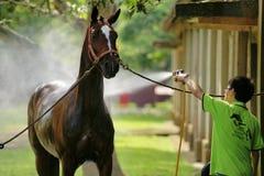 Hästbadning Arkivbild