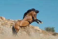 Hästbaksidor upp Arkivfoton