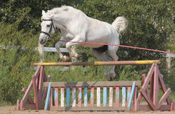 hästbanhoppning Royaltyfri Foto