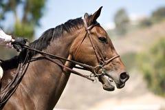 hästbanhoppningshow Royaltyfri Fotografi